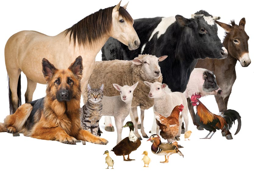 Animal Health & Nutrition